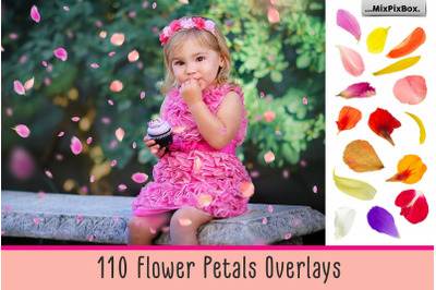 Flower Petals Photo Overlays