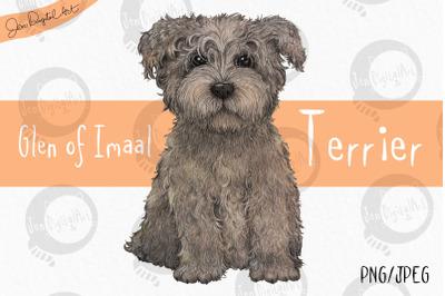 Glen of Imaal Terrier -Grey