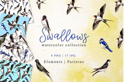 Swallows Watercolor png