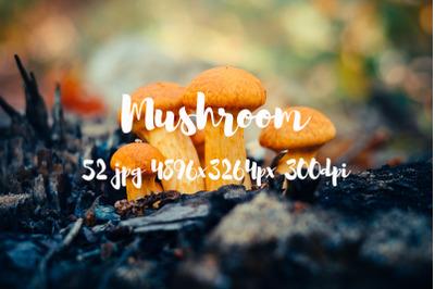 Mushroom photo pack