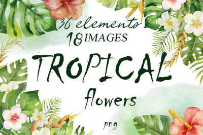 Tropical Flowers. Watercolor collection.