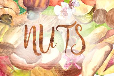 Nuts Watercolor Clip Art Set