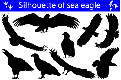 Silhouette of sea eagle