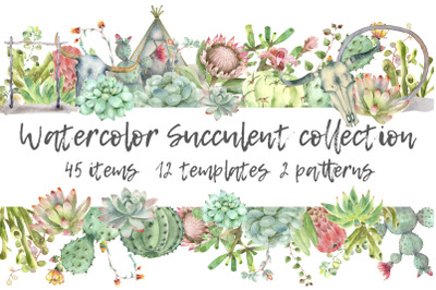 Succulent and Cactus collection