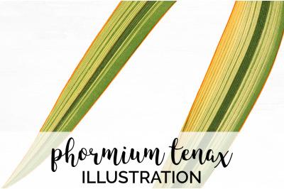Leaf Vintage Phormium Tenax