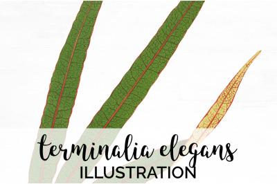 terminalia elegans