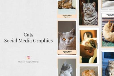 Cats Instagram Stories