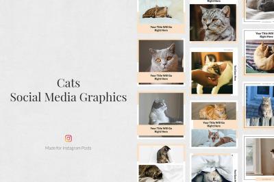 Cats Instagram Posts