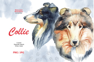 Watercolor dog - Collie