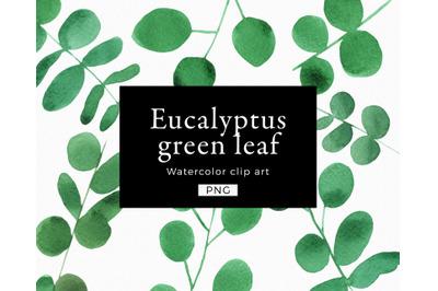 EUCALYPTUS Clipart watercolor