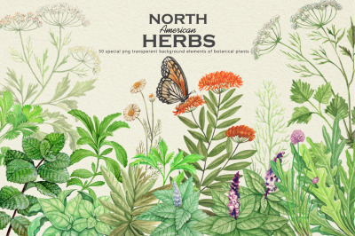 North American Herbs