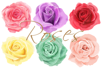 6 Digital Watercolor Roses | Clip Art Illustrations | PNG/JPEG