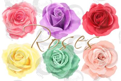 6 Digital Watercolor Roses   Clip Art Illustrations   PNG/JPEG