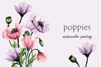 Flowers violet and pink poppies watercolor set.