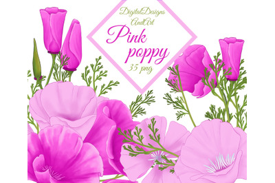 Pink poppy clipart