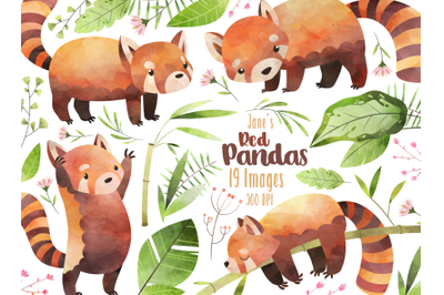 Watercolor Red Panda Clipart