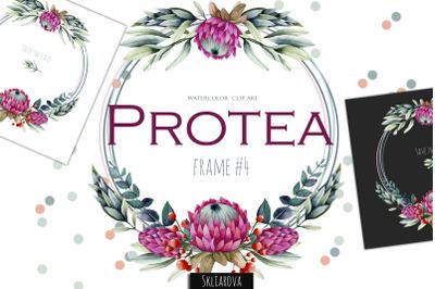 Protea. Frame #4