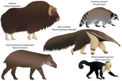 Animals of America