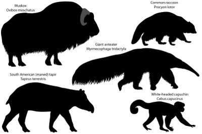 Silhouettes of animals of America