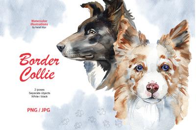 Watercolor dog - Border Collie