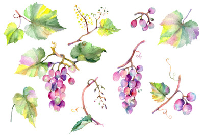 Blue grapes Watercolor png