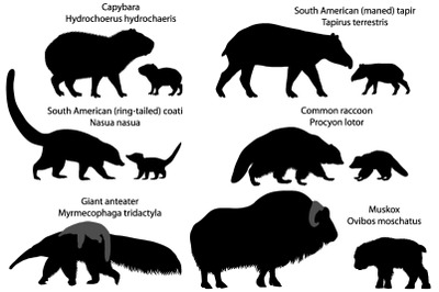 Silhouettes of animals of America with cubs
