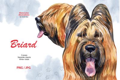Watercolor dog. Briard