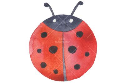watercolor  hand drawn ladybug isolated
