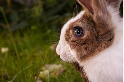 Bunny Rabbit #5 Nature Stock Photography
