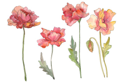 Poppy red Watercolor png