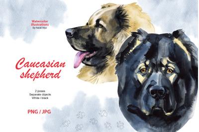 Watercolor dog. Caucasian shepherd