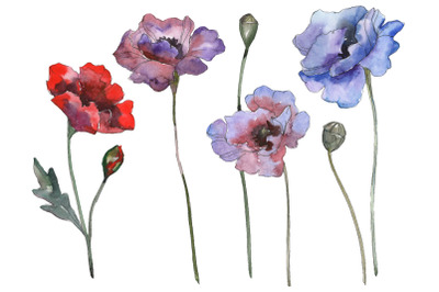 Poppy 1 Watercolor png