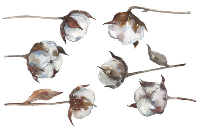 Cotton 2 Watercolor png