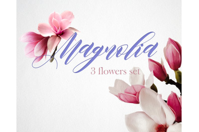 Magnolia Flower Tree Oil/ Watercolor Paint Set.