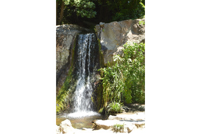 The waterfall flows down from the stones overgrown with plants in the