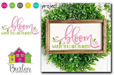 Bloom Where You are Planted - SVG file for Spring