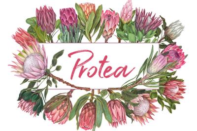 Awesome blossom. Protea flowers