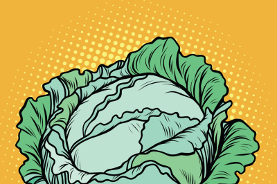 Cabbage, healthy vegetarian food, farm product