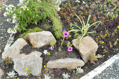 Blooming flowers in flower bed with rocks, Alpine slide