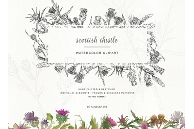 Hand Painted & Sketched Thistle Clip Art - Separate Elements Seamless