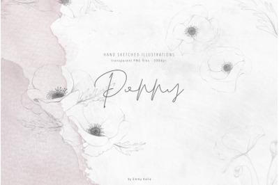 Hand sketched Poppy flower illustrations
