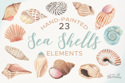 Sea Shell Elements 23 Individual PNG Shells Shore Beach Summer Inspire