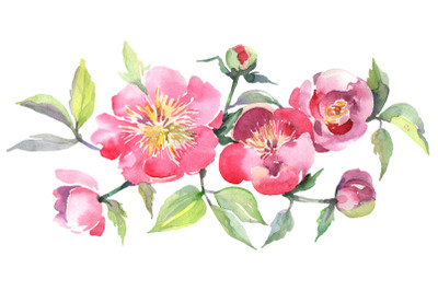 Bouquet with tea pink roses Watercolor png