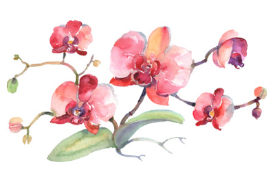 Branch of pink orchids Watercolor png