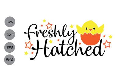 Freshly Hatched Svg, Easter Svg, Easter Chick Svg, Easter Baby Svg.