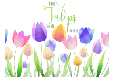Watercolor Tulips Clipart