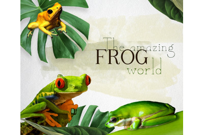 The amazing frog world.  3 different frogs with and without leafs