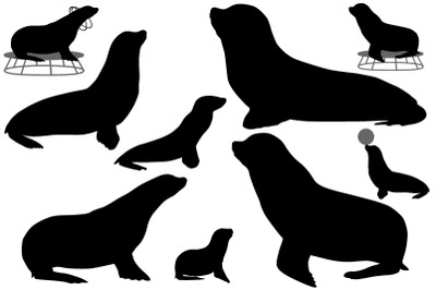 Silhouette of sea lion