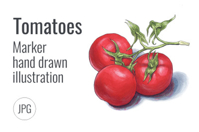 Tomatoes. Marker hand drawn illustration