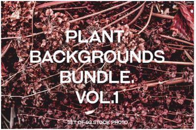 Plant backgrounds photo stock